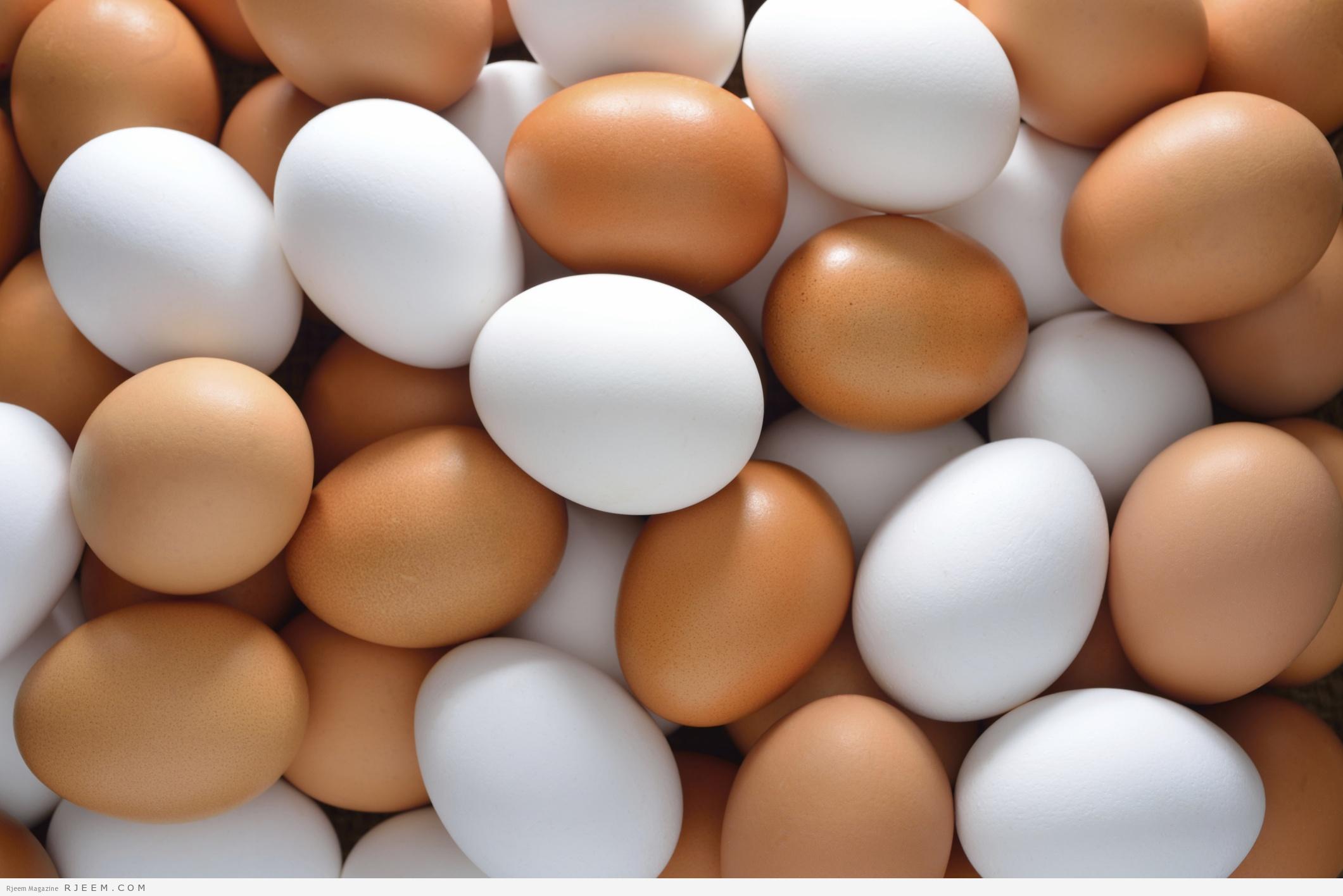اسعار البيض اليوم